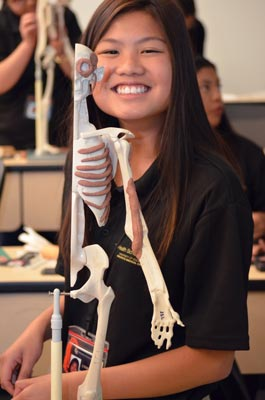 Student working with skeleton maquette